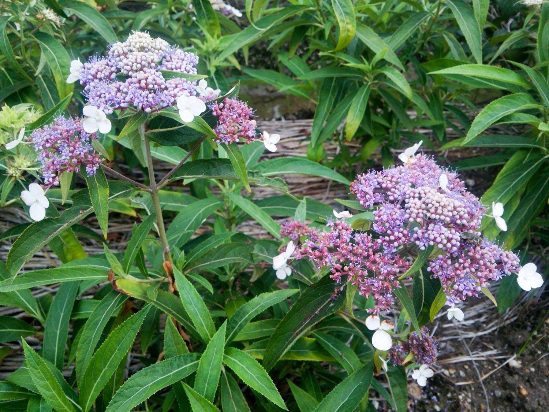 庭に植えたい珍しい植物