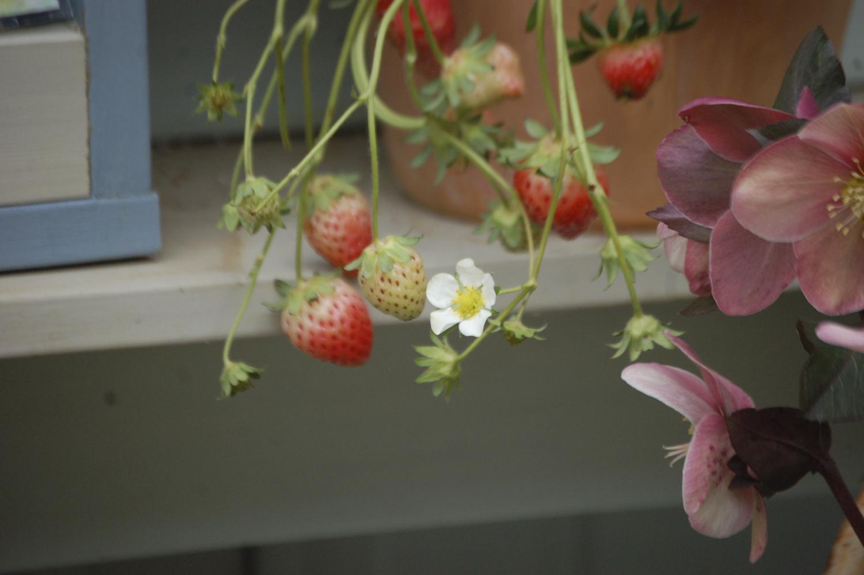 子どもや孫が喜ぶ植物